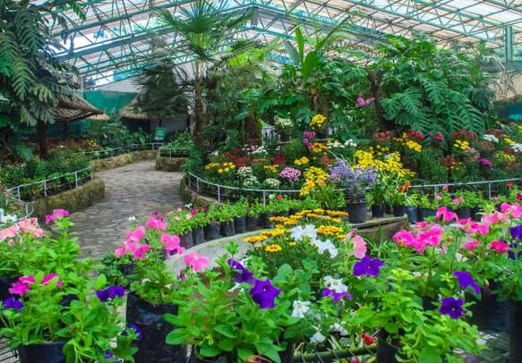 An inside view of the Flower Exhibition Centre in the capital city of Gangtok