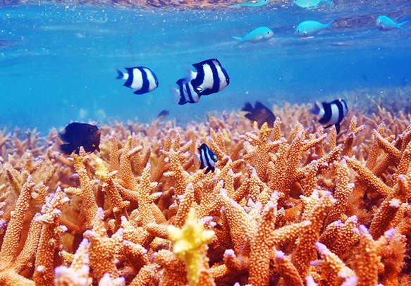 Enjoy water surfing in Maldives