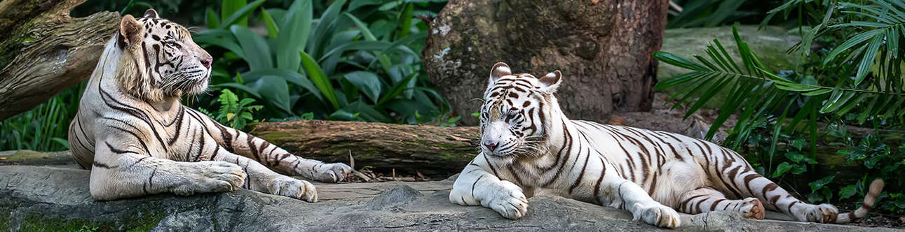 Visit the Singapore Zoo