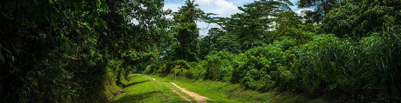 Hiking Trails at Bukit Timah Nature Reserve
