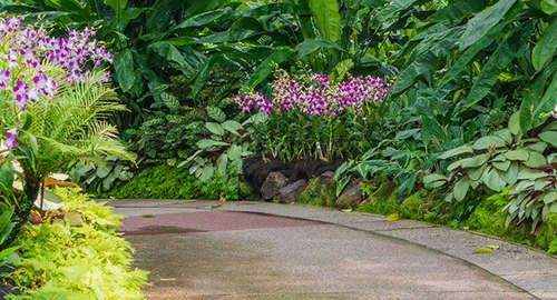 Treat yourself to the beauty of nature in National Orchid Garden