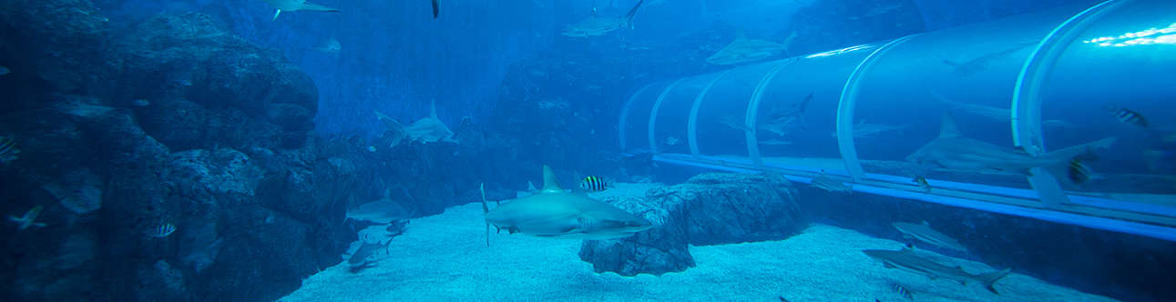 Visit the Marine Life Park in Singapore