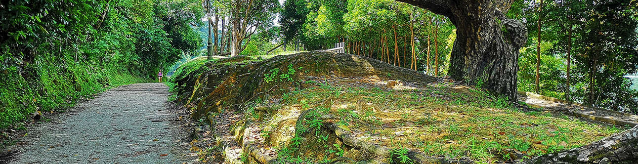Visit the MacRitchie Reservoir in Singapore