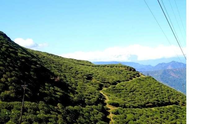 Lush green landscape in Darjeeling