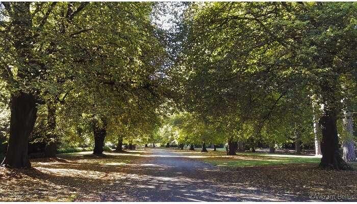 Botancial garden in Christchurch