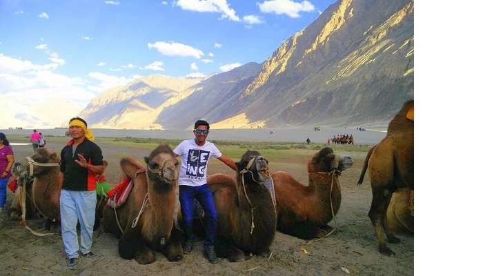 ninad with camels in ladakh