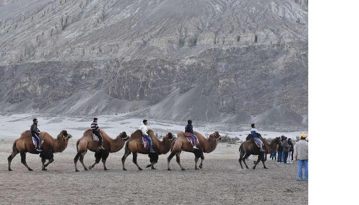 lokpal romantic trip to ladakh: camel riding