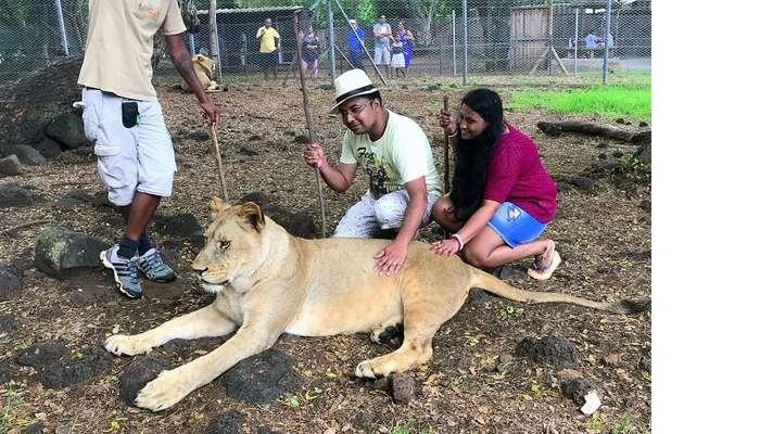 Himanshu honeymoon trip to Mauritius: interacting with lions