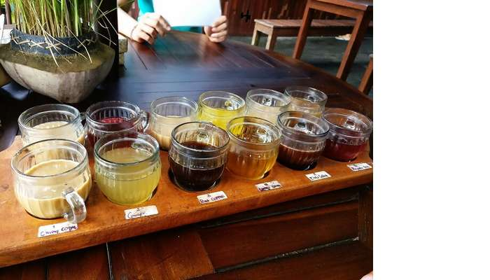 Tea tasting tour in Bali