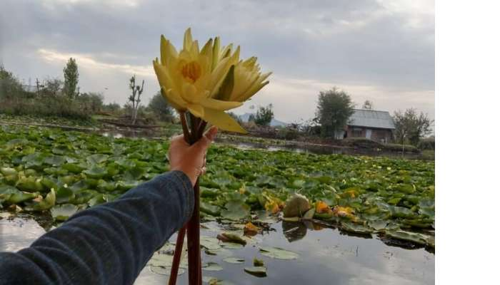ambience of the Dal Lake
