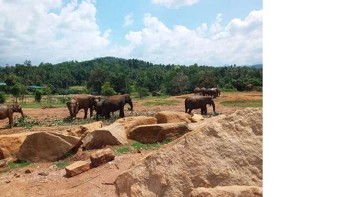 innawela Elephant Orphanage