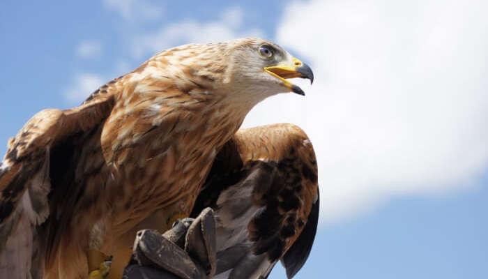 Encounter a hawk