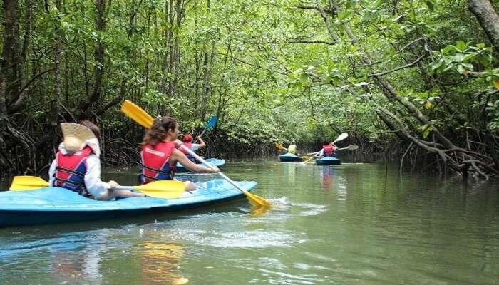 Tourists on a mangrove kayaking tour in Langkawi