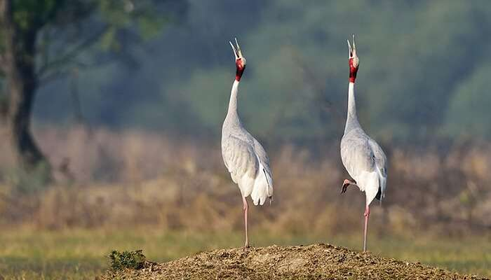 Image result for Bharatpur