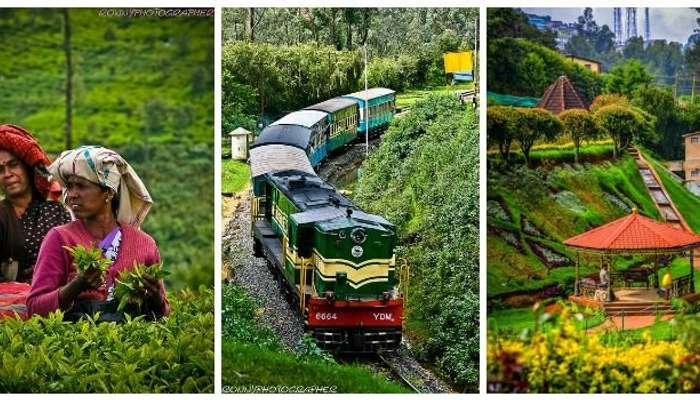 Explore the tea plantation, trains, rose garden in Ooty