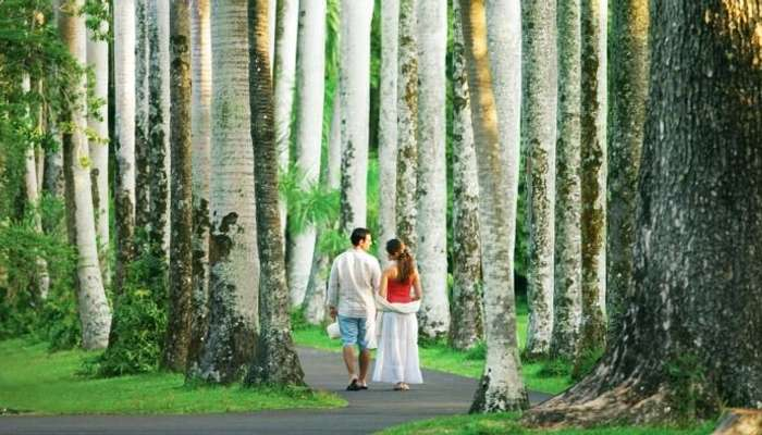 Explore the Pamplemousses Botanical Garden with your partner in Mauritius