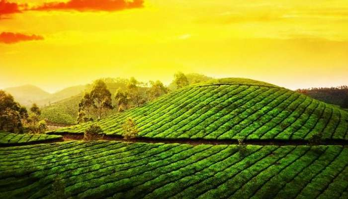 Munnar is one of the best honeymoon locations in Kerala.