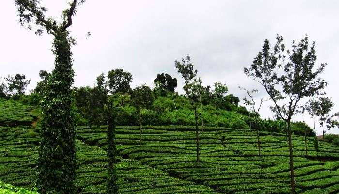 Honeymoon Destinations in Kerala is incomplete without Wayanad.
