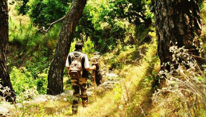 Trek in the jungle trails and spot the myriad wildlife of Binsar