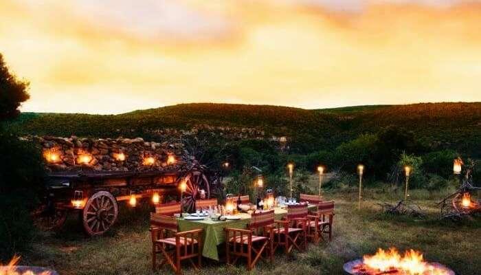 Güney Afrika'daki Cape Winelands'ta vahşi doğada romantik bir akşam yemeği