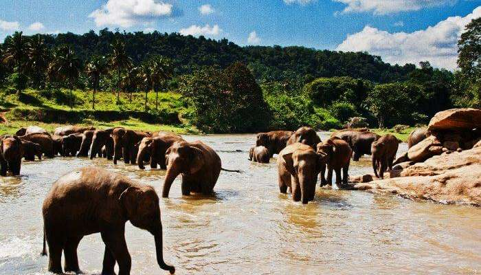 PinnawalaElephant Orphanage in Sri Lanka