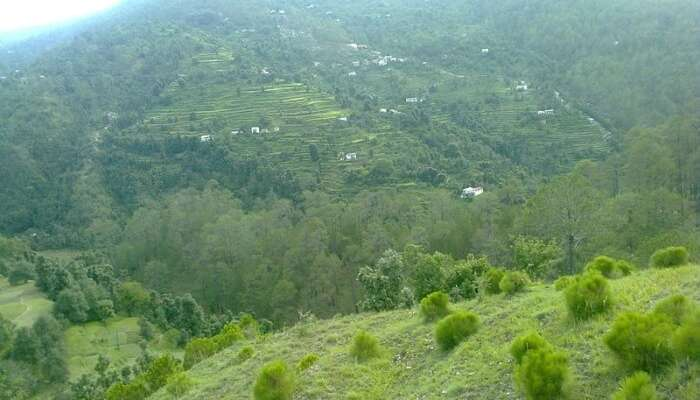 Aarohi, Peora, Uttarakhand