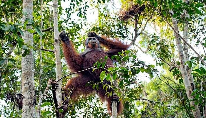Tanjung Puting Wildlife Reserve
