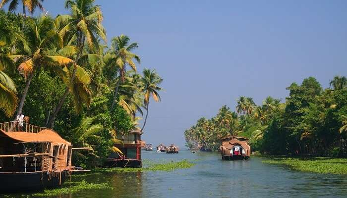 Ride the boats in the backwaters at Alleppey