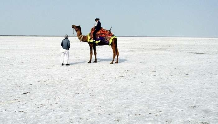 A camel ride on the white desert at Rann of Kutch