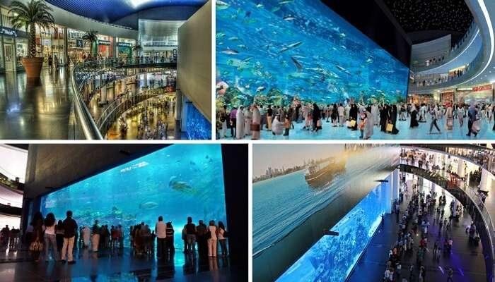 Many views of the Dubai Aquarium for free