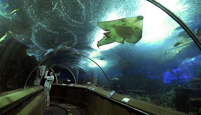 Underwater World is one of the popular tourist places in Singapore