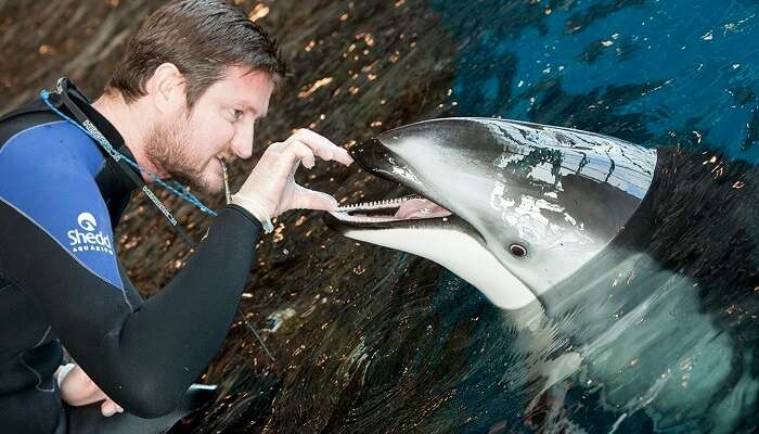 A diver feeding the dolphin of Sentosa Underwater World