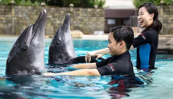 A kid having the time of his life while interacting with a dolphin in Sentosa Underwater World