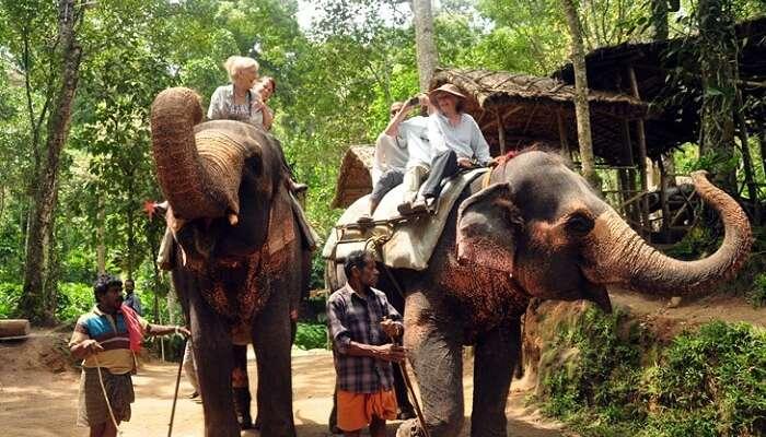 10 Things To Do In Thekkady: Walks, Tours & Safaris