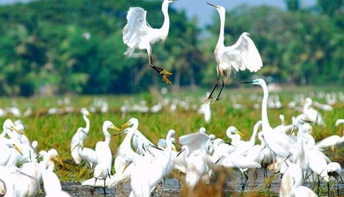 A flight of birds playing in Kumarakom Bird Sanctuary