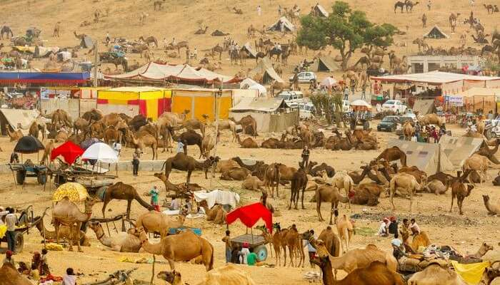 13 Places to Visit In Pushkar on Your Rajasthan Holiday 2019