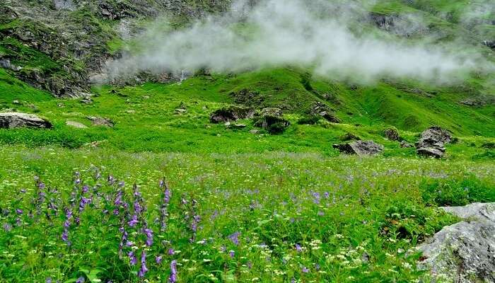 Mist floats over the Valley of Flowers