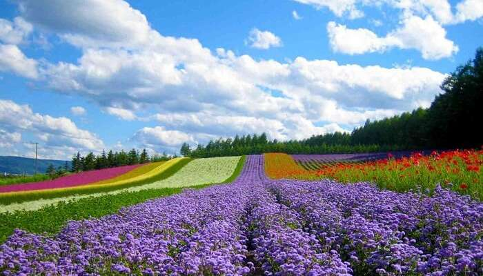 A beautiful shot of the gorgeous Valley of Love at Dalat in Vietnam