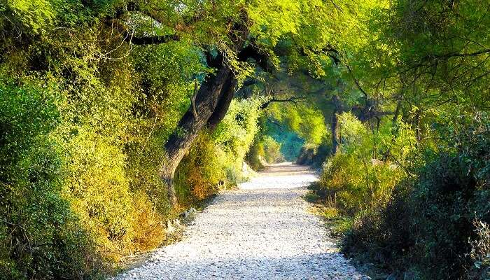 A path in the middle of the Bharatpur Bird Sanctuary
