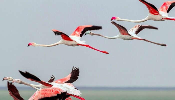 20 Fascinating Bird Sanctuaries In India