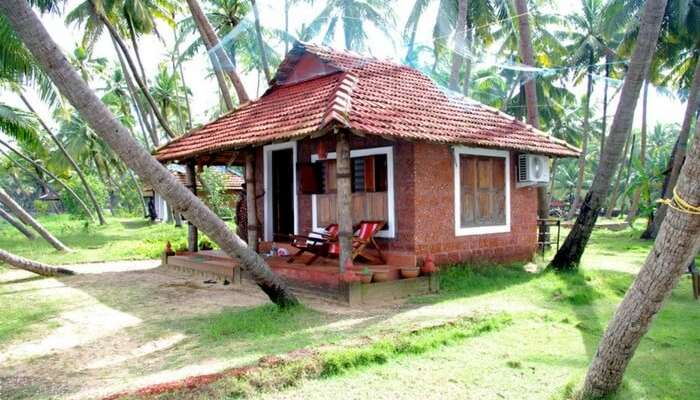 A picturesque cottage of Oyster Opera farmstay surrounded by coconut trees