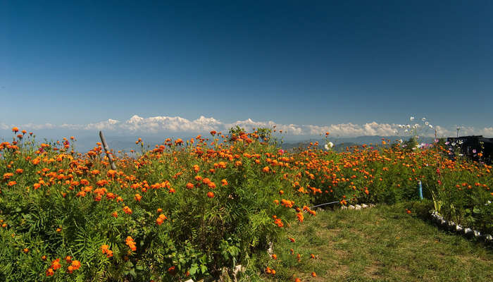 beautiful views of snow mountains in Mukteshwar