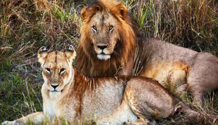Visit the Gir National Park in Gujarat & spot lions! holidays Places gujarat india