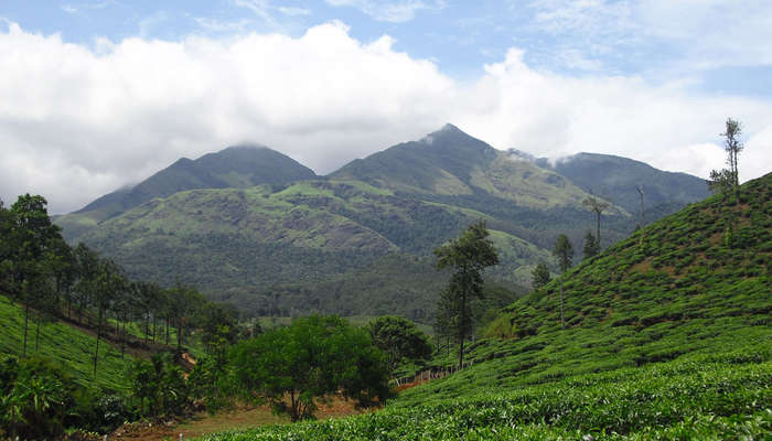 lush green mountains of Wayanad