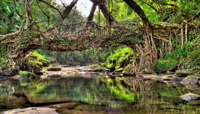 Living Root Bridges, Meghalaya: A Marvel Of Nature