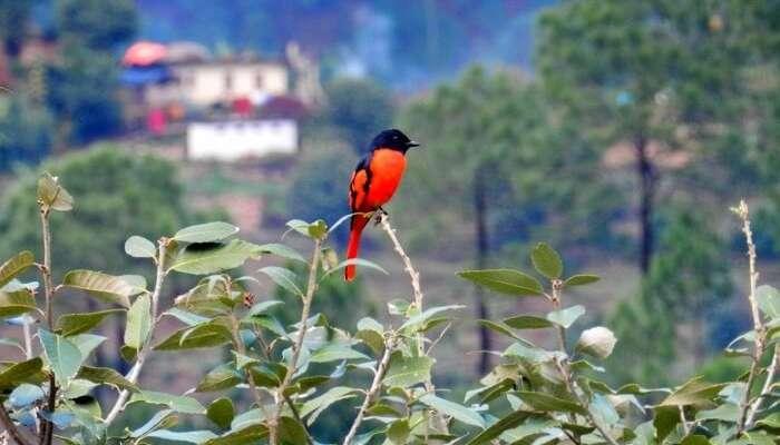 bird watching in Kausani