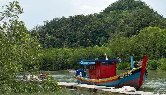 Mangrove tour in Kilim Karst Geoforest Park