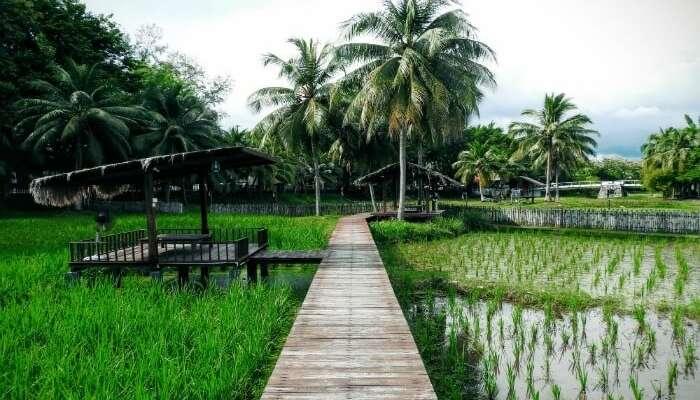 rice museum of Langkawi
