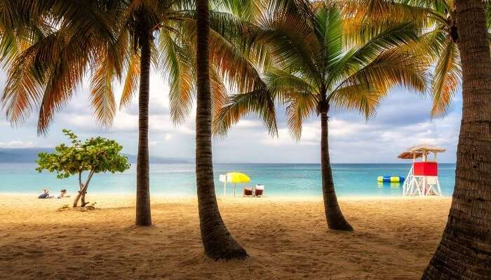 Palm trees on brown sand Doctor Cave Beach