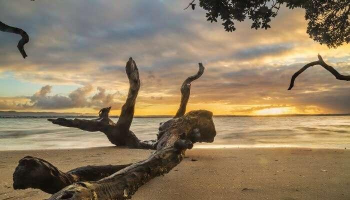A quiet Point Chevalier Beach near Waitemata Harbour in Auckland